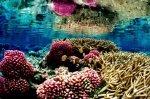 Роботы для спасения каралловых рифов
