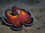 Вдохновлённый осьминогом камуфляж для мягкой робототехики